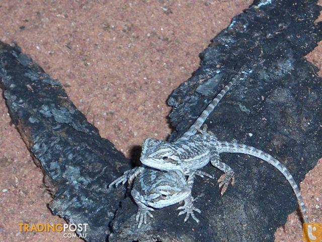 Qld reptile licence application online